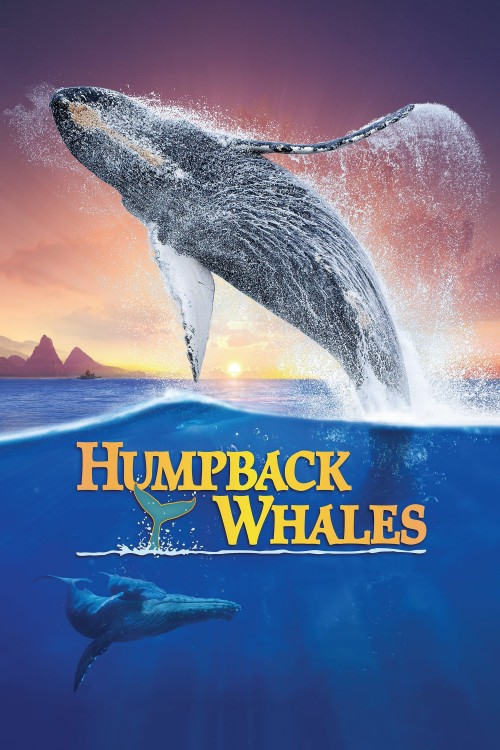 humpback whales cover image